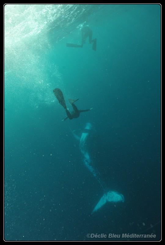 Brett and whale